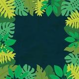 Cadre 1 des feuilles tropicales Image stock