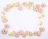 Cadre des fleurs roses de Lantana de Caprise Photos stock