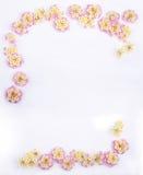 Cadre des fleurs roses de Lantana de Caprise Photographie stock