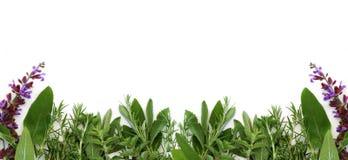 Cadre des herbes fraîches Photographie stock libre de droits