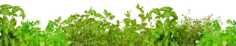 Cadre des herbes fraîches Images libres de droits