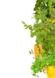 Cadre des herbes fraîches Image libre de droits