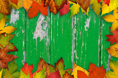 Cadre des lames d'automne Photo libre de droits