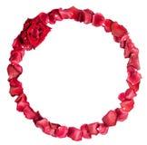 Cadre des pétales roses rouges Images stock