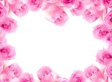 Cadre des roses. Photographie stock libre de droits