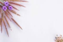 Cadre des textes de fleur d'herbe Photographie stock libre de droits