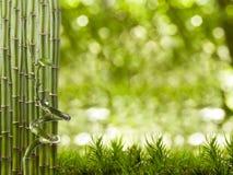 Cadre en bambou image libre de droits