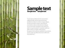 Cadre en bambou photographie stock libre de droits