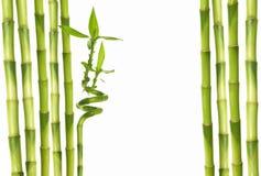 Cadre en bambou frais Photos stock