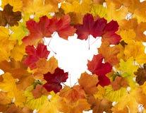 Cadre en forme de coeur des feuilles colorées d'érable Photo stock