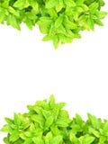 Cadre et blanc vert clair de feuille Photo libre de droits