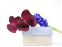 Cadre et fleurs de cadeau Images stock