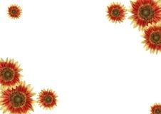 Cadre, fleurs Photographie stock