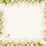 Cadre floral Photographie stock