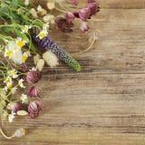 Cadre floral - beau fond d'été Images stock