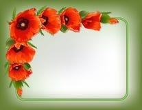 Cadre floral de pavots rouges, vecteur Photo libre de droits