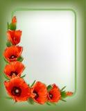 Cadre floral de pavots rouges, vecteur Photo stock