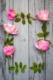 Cadre floral de roses roses romantiques sur le gris, fond en bois peint Image stock