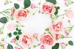Cadre floral des roses, des bourgeons et des pétales roses sur le fond blanc Configuration plate, vue supérieure Fond floral Photos stock