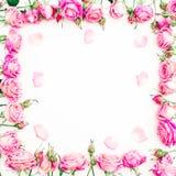 Cadre floral des roses et des pétales roses sur le fond blanc Configuration plate, vue supérieure Image stock
