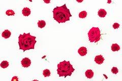 Cadre floral fait de bourgeons et chrysanthèmes de roses rouges sur le fond blanc, configuration plate, vue supérieure Photos stock