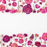 Cadre floral fait de roses et bourgeons roses sur le fond blanc Rose rouge Configuration plate, vue supérieure Image stock