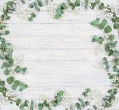 Cadre floral naturel avec des branches d'eucalyptus Photos libres de droits