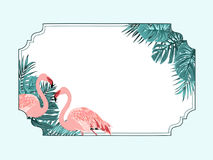 Cadre horizontal tropical de frontière de flamant exotique Photos libres de droits