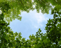 Cadre naturel des arbres au-dessus du ciel bleu Photo libre de droits
