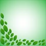 Cadre naturel pour une carte des feuilles vertes réalistes Images stock