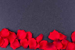 Cadre noir de fond de pétales artificiels Image libre de droits