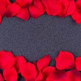 Cadre noir de fond de pétales artificiels Image stock