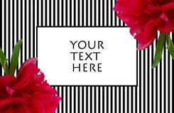 Cadre noir et blanc de rayures de pivoine pour le texte Photo libre de droits