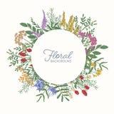 Cadre ou frontière rond décorée des fleurs, des inflorescences et des feuilles sauvages de floraison colorées de pré Circulaire m illustration de vecteur