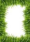 Cadre ou trame grand d'herbe Images stock