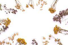 Cadre plat de configuration Branches sèches de tansy et de bruyère sur un fond blanc Photos stock