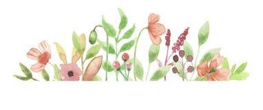 Cadre Poppy Flower Floral Hand Painted d'aquarelle Photographie stock