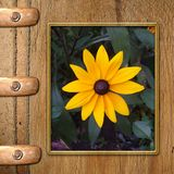 Cadre pour la photo Photos stock