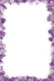 Cadre pourpré de fleur Photo stock