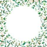 Cadre rond avec des branches d'eucalyptus illustration libre de droits
