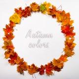 Cadre rond de feuilles d'automne Image stock