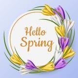 Cadre rond de ressort avec la fleur colorée de crocus Image libre de droits
