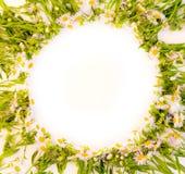 Cadre rond des buissons de marguerites sur un fond blanc Photos libres de droits