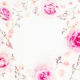 Cadre rond des roses et des pétales roses sur le fond blanc Configuration plate, vue supérieure Photographie stock libre de droits