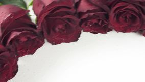 Cadre rond des roses rouges avec des gouttelettes d'eau sur la vidéo blanche de longueur d'actions de fond banque de vidéos
