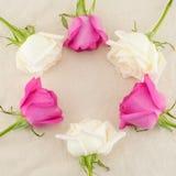 Cadre rond fait à partir des roses roses et blanches Photo stock
