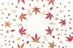 Cadre rond fait de feuilles d'automne, fleurs sèches et cônes de pin sur le fond blanc Configuration plate, vue supérieure, l'esp Photographie stock