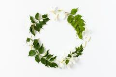 Cadre rond fait de feuilles de vert et fleurs blanches sur le blanc Photographie stock libre de droits