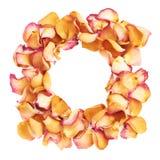 Cadre rond fait de pétales de rose roses comme composition romantique au-dessus du fond blanc Image libre de droits