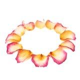 Cadre rond fait de pétales de rose roses comme composition romantique au-dessus du fond blanc Image stock